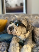 The Coolest Dog